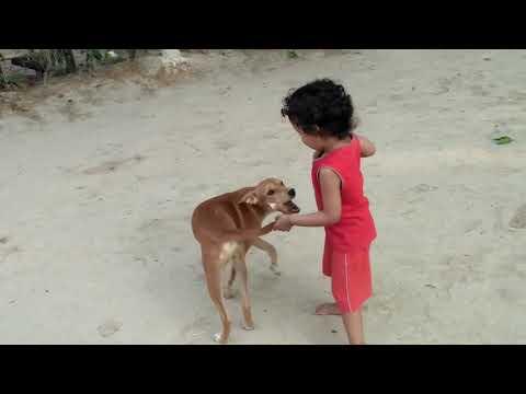 फनी बेबी - Funny Cute Baby Girl - Annoying Dog - Desi  Village videos