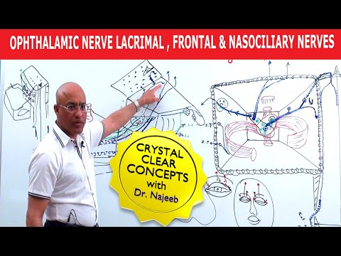 Ophthalmic Nerve – Lacrimal, Frontal & Nasociliary Nerves
