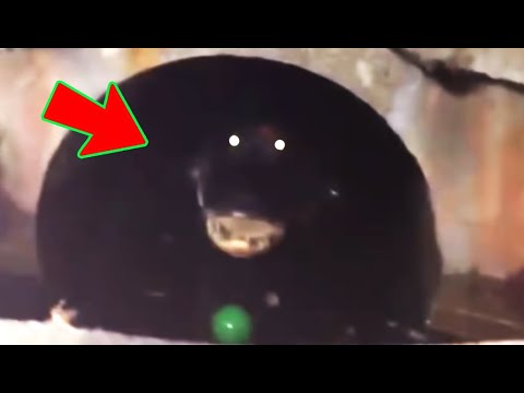 6 Giant Mysterious Creatures Caught On Camera!