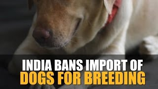 India bans import of dogs for breeding