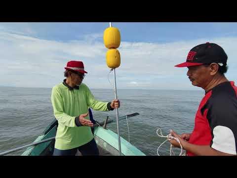 Menjaring (ranto) ikan terubok sesi 1