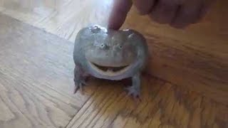 CRAZY screaming frog...!!!