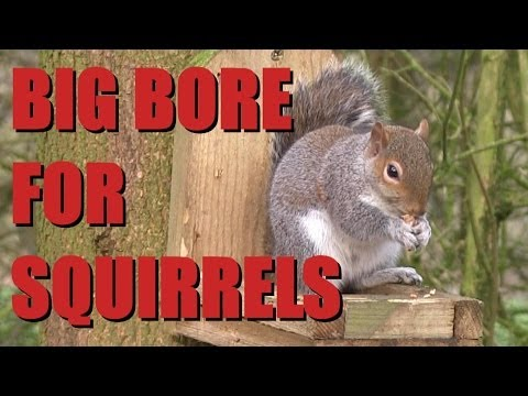 Hunting squirrels with big bore air rifles