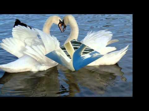 Рок Острова - Два белых лебедя