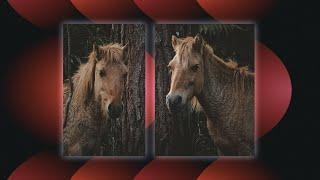 How To Create A Split Screen Effect In Adobe Premiere Pro