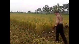 Alat Pemotong Padi Modern / Harvest Cutting Modern