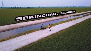Paddy Fields of Sekinchan, Selangor, Malaysia ???? | Dji Mavic Pro | Freestyle FPV | Sony A7III | 4K