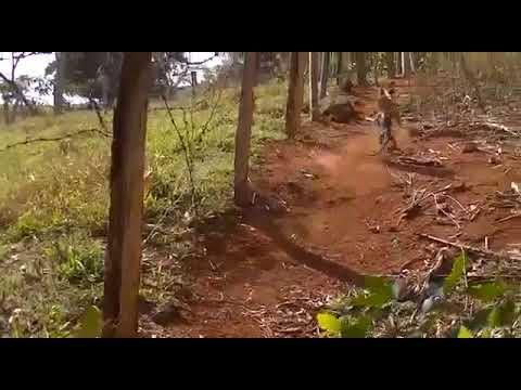 Lagarto Gigante ataca cachorro do Cipriano na Laranjeira