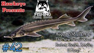 Russian Fishing 4 | #42 - Belaya River: Burbot, Sterlet, Zander, & More! - Aug 2018 UPDATE