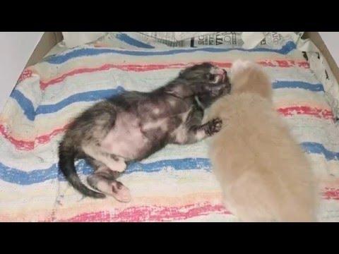 El vídeo las lombrices en el intestino de la persona