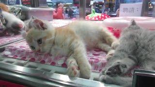 Hong Kong Pet Street 香港寵物街 / 金魚街