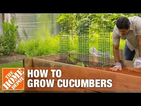 , title : 'How to Grow Cucumbers   Planting Cucumbers   The Home Depot