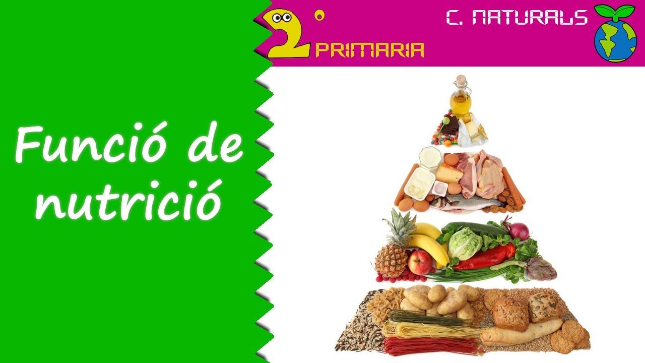 Ciències de la Naturalesa. 2n Primaria. Tema 1. Funció de nutrició