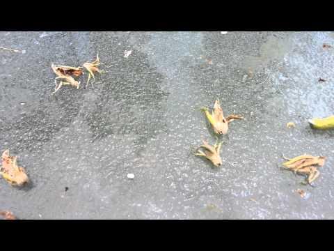 Vermakar tablets mula sa mga worm