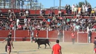preview picture of video 'Fiestas de Pinto 2012. Suelta de reses en plaza de Toros.'