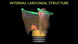 Larynx Animation
