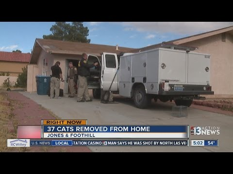 37 Cats Removed From Las Vegas Home