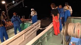 由比桜えび漁 Lucensosergia Lucens, Sakura Shrimp Fishery At Yui Japan