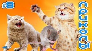 Приколы с Котами и Кошками 2019   Смешные Коты и Кошки 2019   Приколы с Животными #8