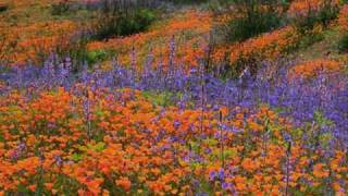 """""""Wildflowers"""" -Tom Petty and the Heartbreakers"""