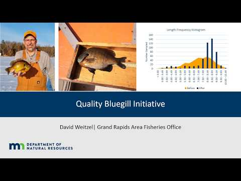 Quality bluegill initiative
