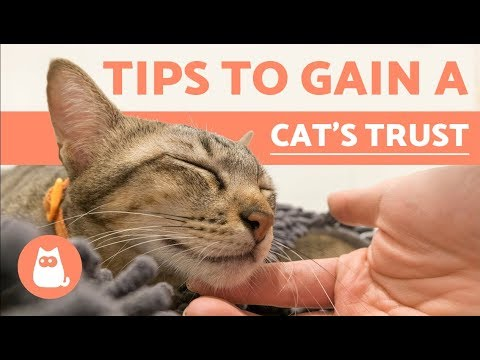How to Gain the Trust of a Cat