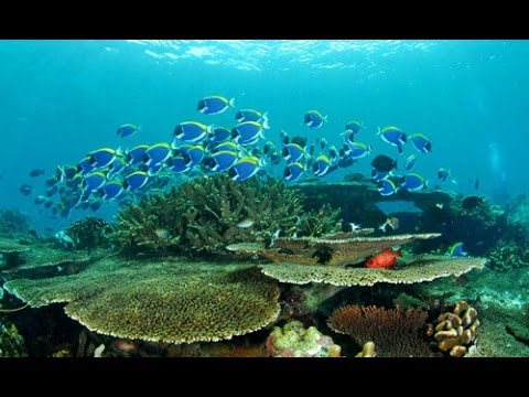 Scuba Diving Koh Lipe, Thailand | Underwater HD Video by Freedom Divers, Phuket