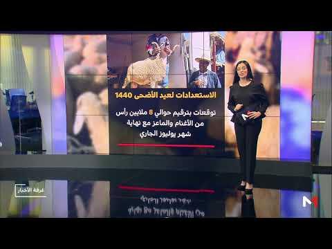 العرب اليوم - شاهد: المكتب الوطني للسلامة الصحية في المغرب يُرقم 7 ملايين رأس ماشية