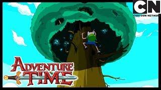 Время приключений   На дереве   Cartoon Network