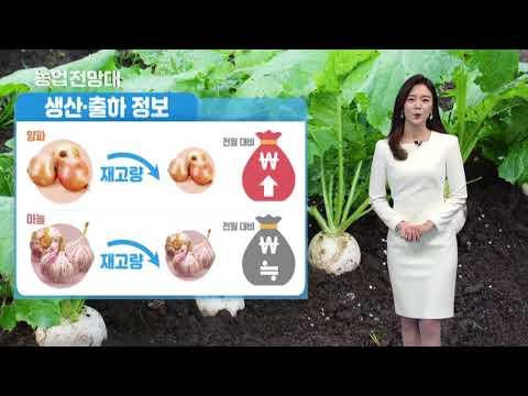 YTN 농업전망대(엽근, 양념, 콩, 감자 관측 4월) (2019.04.07.) 이미지
