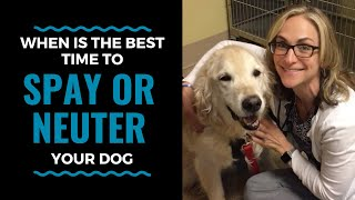 When is the best time to spay or neuter your dog? Vlog 62