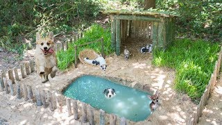 Survival Builder: Rescues Five Wild Puppies Lost Mum Building House And Pool