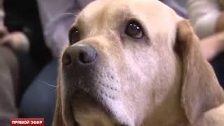 Собаки, которые нас лечат