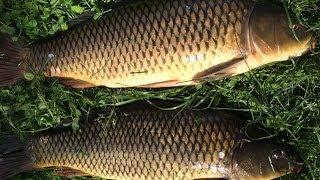 Рыбалка на карпа река оскол ловля