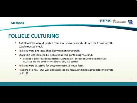 Thumbnail image of video presentation for Can Mouse Ovarian Follicles Grow and Ovulate In Vitro?