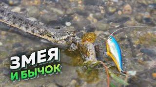 Рыбалка в Дагестане  Прикольный случай на рыбалке !)))