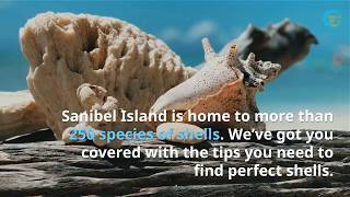 How To Find Perfect Shells in Sanibel Island