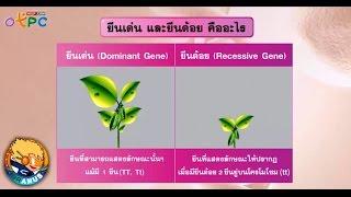 สื่อการเรียนการสอน ลักษณะเด่น ลักษณะด้วย ยีนเด่น ยีนด้อยม.3วิทยาศาสตร์