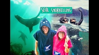 Cape Town Bucket List / Seal Snorkeling, Cape Town