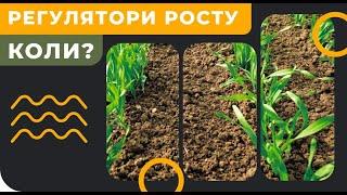 РЕГУЛЯТОР РОСТУ - коли і для чого вносити на пшеницю або ячмінь?
