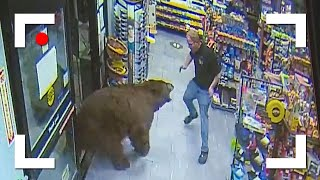 Unexpected Wild Bear Encounters Caught On Camera!