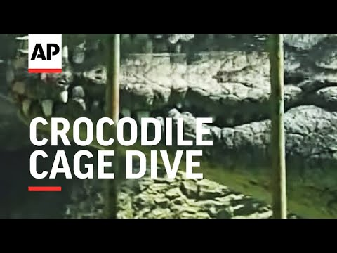 Video World's first Crocodile Cage Dive gives tourists a thrill