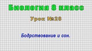 Биология 8 класс Урок 28