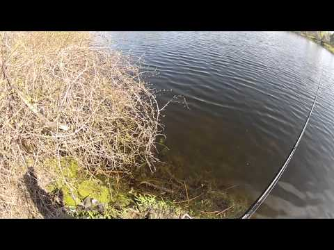 Pre Spawn Jig Fishing For Bass – On Shore