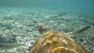 preview picture of video 'Swimming with Turtles 2'