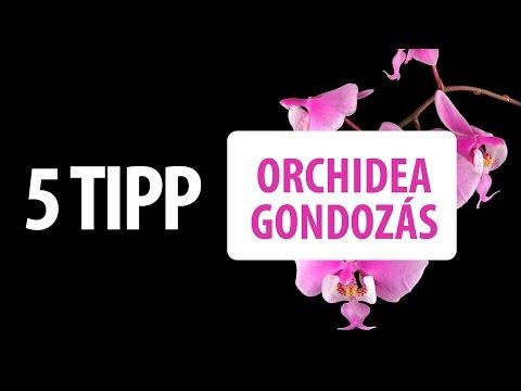 Orchidea összes levele lehullott - hogyan öntözzük télen? mikor ültessük át?