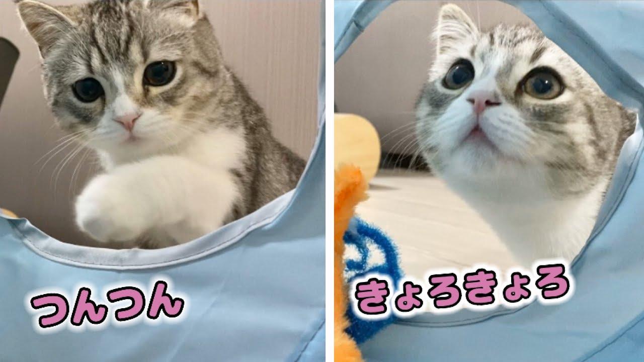 トンネルの中に侵入するのが怖くてビビっちゃう子猫…笑!