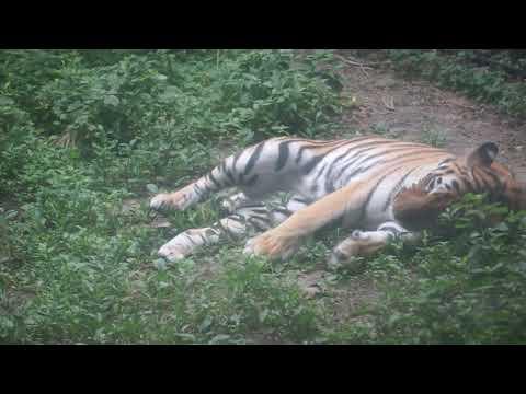 ミライののんびりタイム(2020.08.08撮影)★到津の森公園