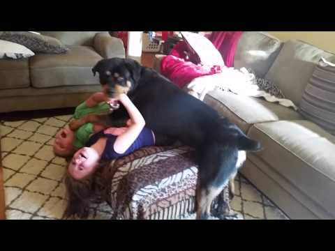 Rottweilers are great with kids!