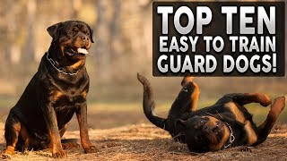 Top 10 EASY TO TRAIN Guard Dog Breeds!